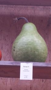 Pumpkin or pear?