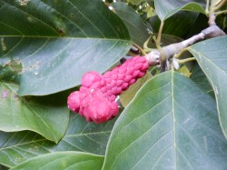 More unusual plant life!
