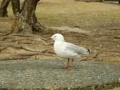 seagull!