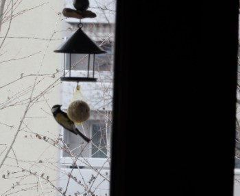 bird-on-feeder
