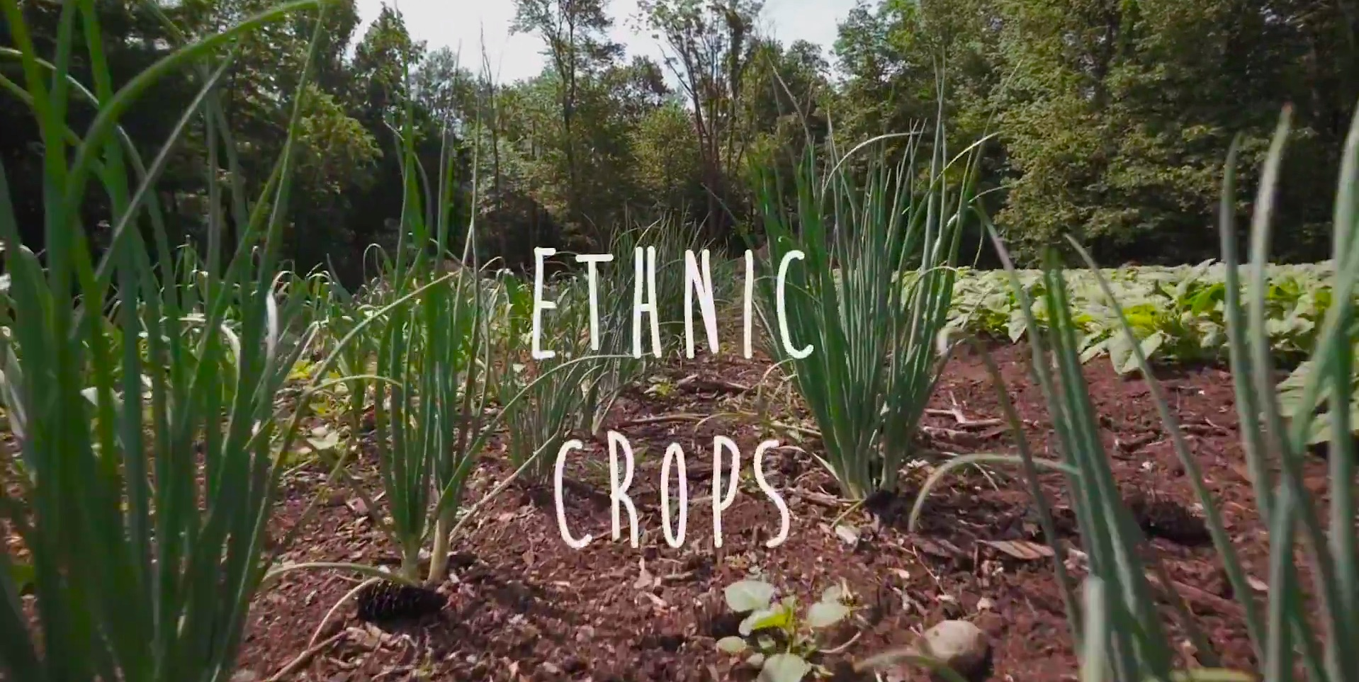 """ItsBongoBoy – """"Ethnic Crops"""""""