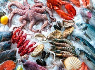 Pescados y Cefalópodos