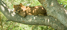 4-days-queen-elizabeth-np-safari