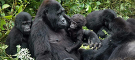 8-days-uganda-gorilla-safari