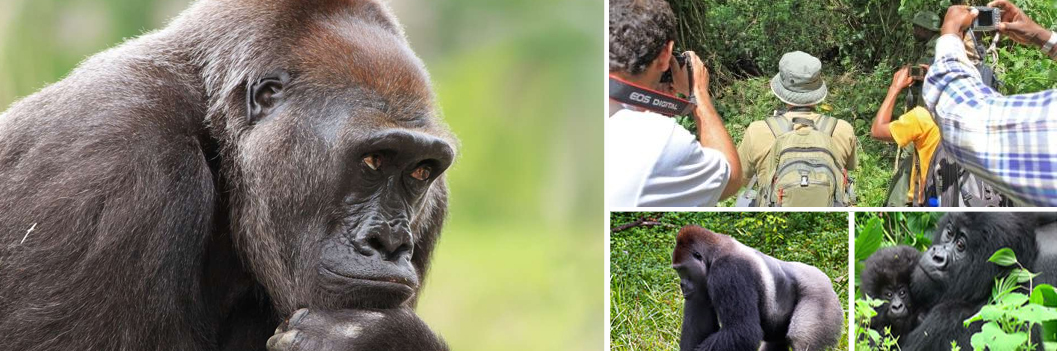 lowland-gorilla-trekking-in-kahuzi-biega