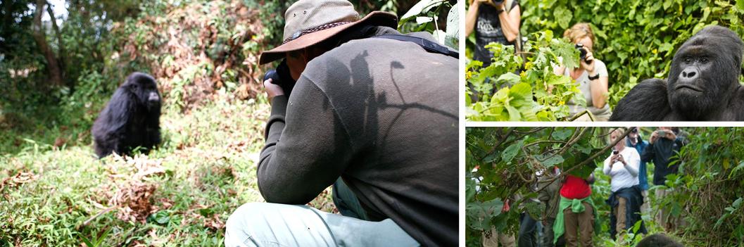 gorilla-trekking-in-virunga-national-park-1
