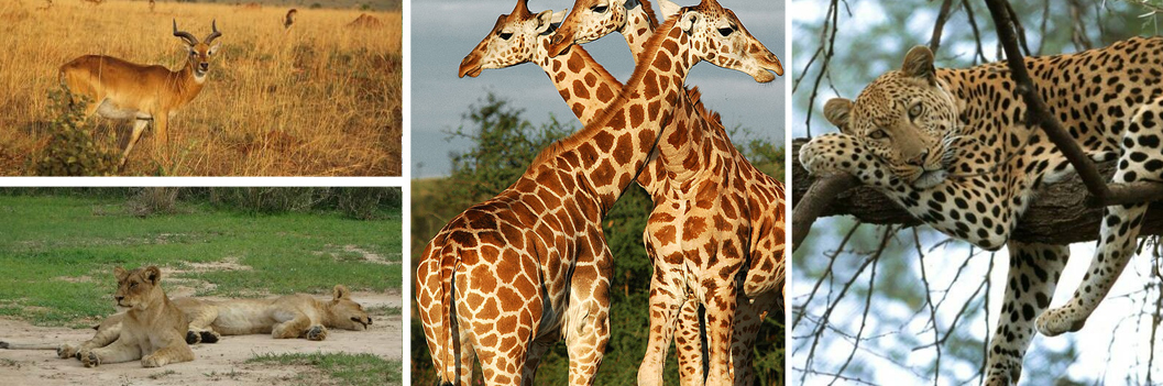 murchison-falls-national-park-wildlife