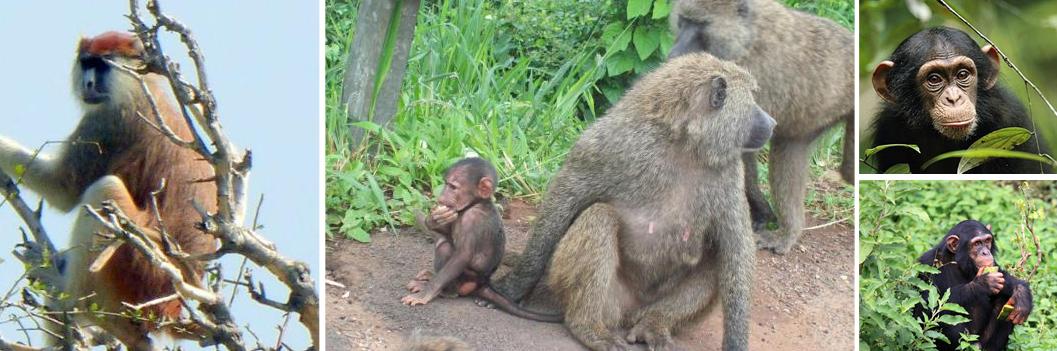primates-murchision-falls