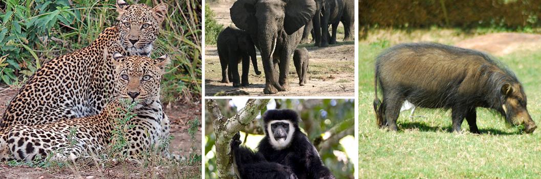 wildlife-at-kibale-np
