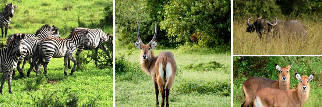 wildlife-at-lake-mburo