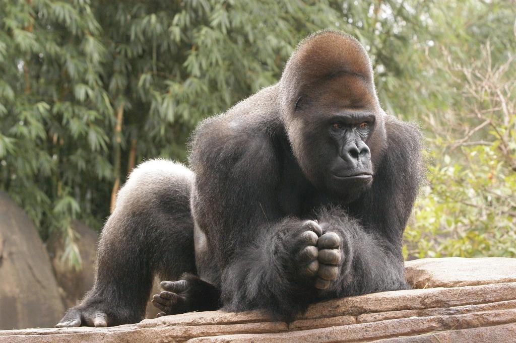 Congo safari