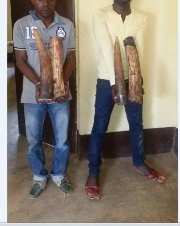 Congo/Brazza: Comparution de 4 présumés délinquants fauniques à Dolisie et Pointe Noire