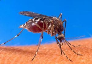 """L'épidémie """"Chikungunya"""" à Kinshasa: des précautions à prendre pour se protéger…"""