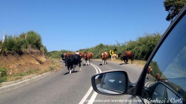 estrada-Punihuil-Chile