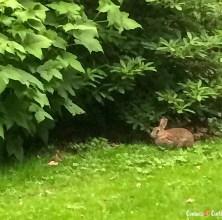 Um coelhinho!