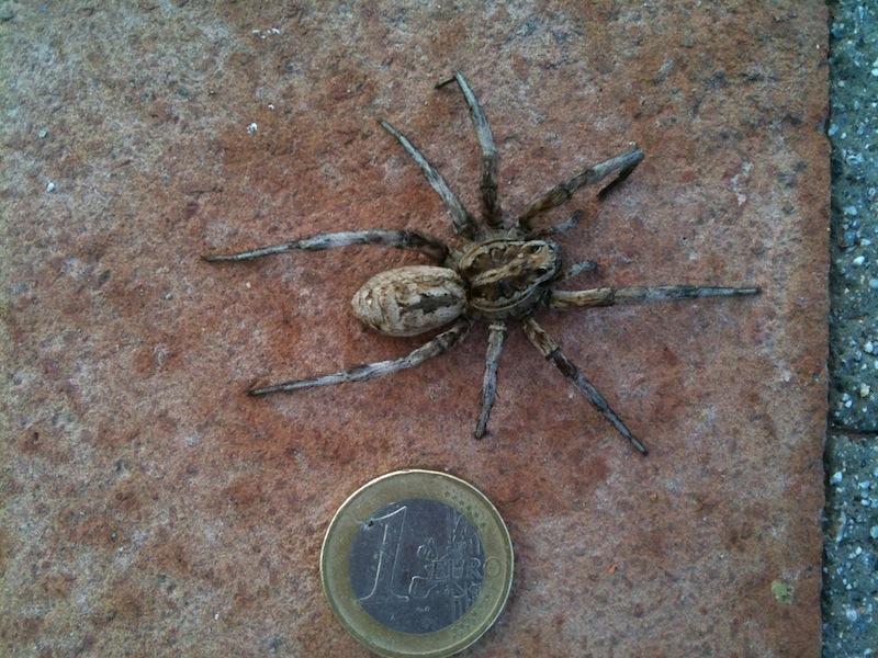 spiders look away now