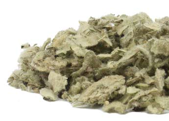 Mullein Leaf, V. thaspus, V. densiflorum, the online shop at Conjure Work, herbs, roots and oils for sorcery, by Magus (Kevin Trent Boswell)