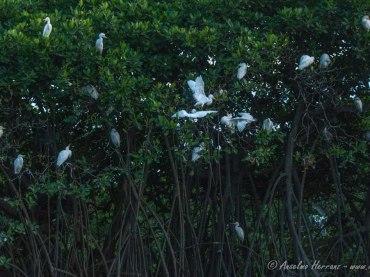 Avistamiento de Aves en el Delta Saloum – Birdwatching en Toubakouta
