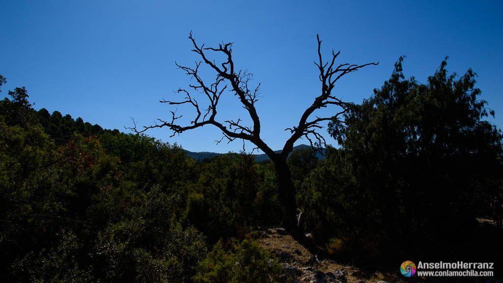 Arbol quemado en Sierra Mágina