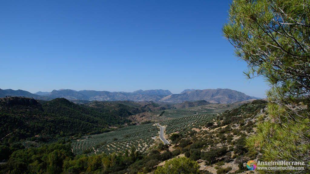 Olivos y Encinas en Mata Behid - Sierra Mágina
