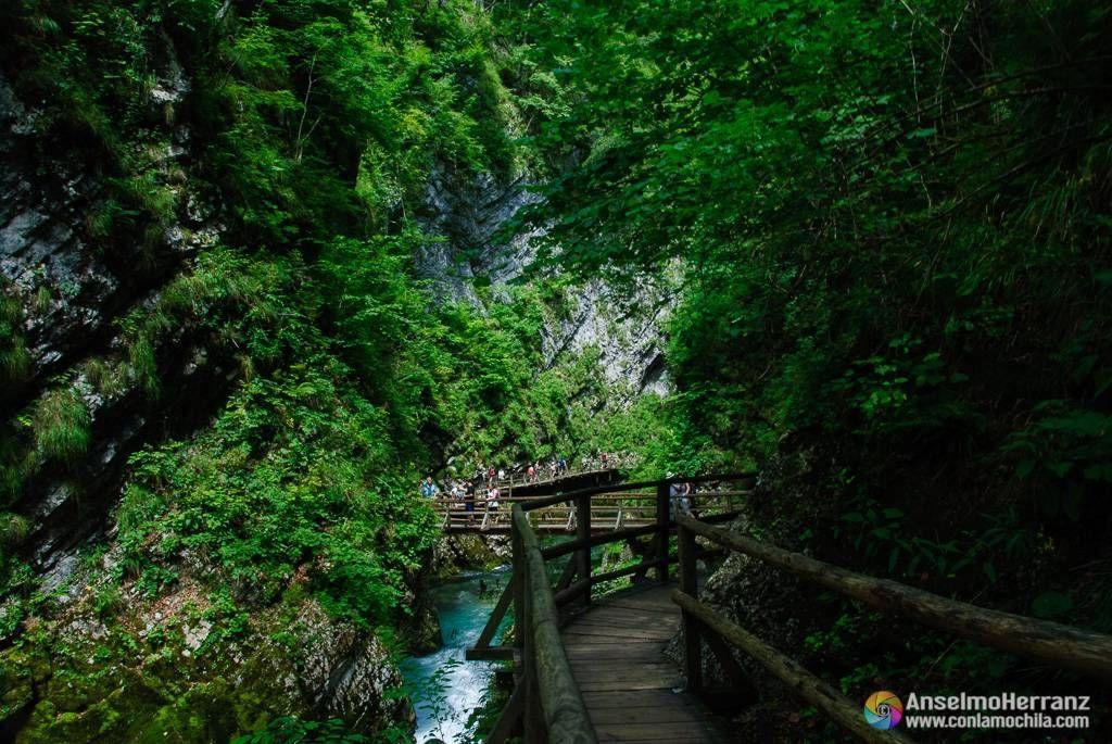 Pasarela y puente de madera - Vintgar Gorge - Eslovenia