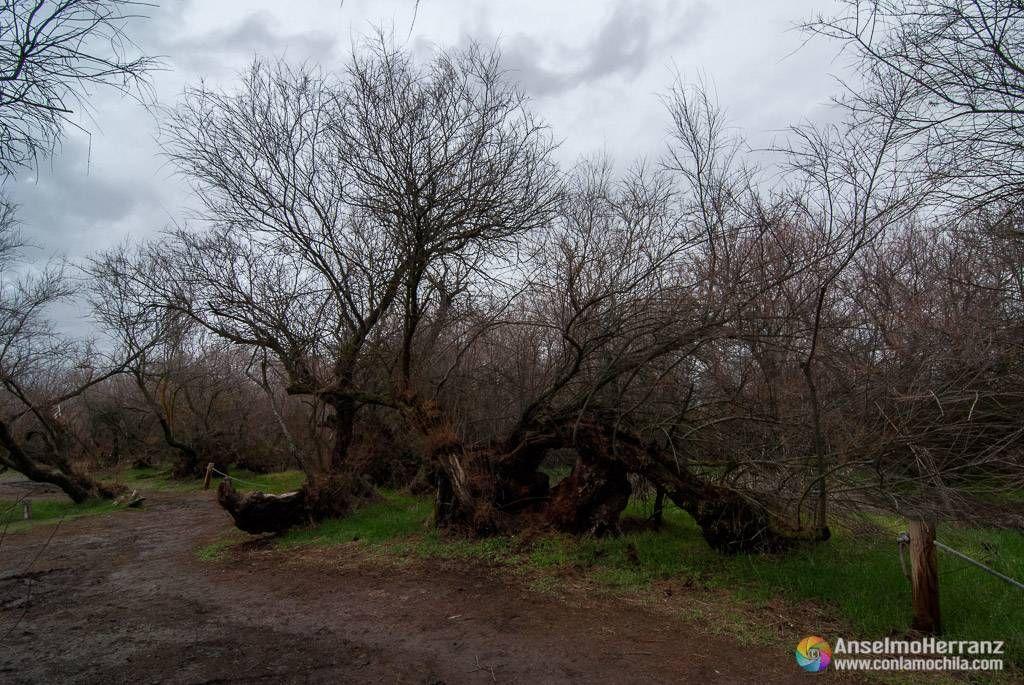 Bosque de Tarayes - Isla del Pan - Las Tablas de Daimiel