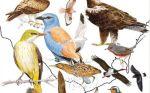 Guía de Aves de España