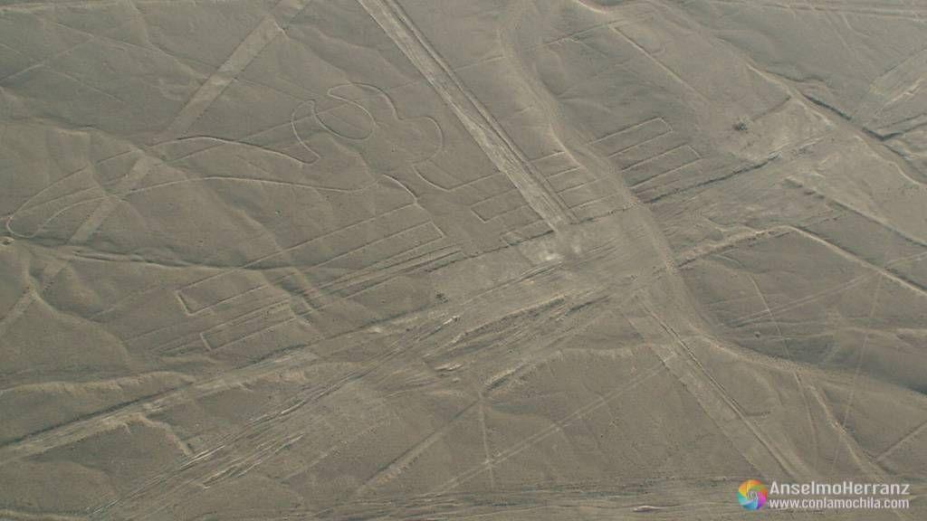 Guacamayo - Líneas de Nazca - Perú