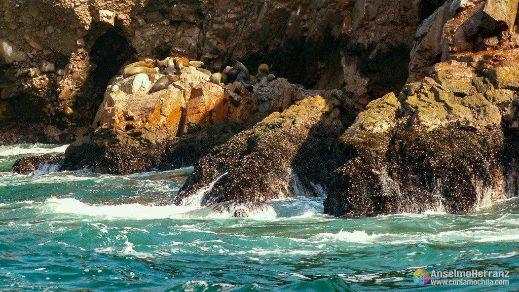 Lobos Marinos sobre las rocas de Islas Ballestas - Ica - Perú