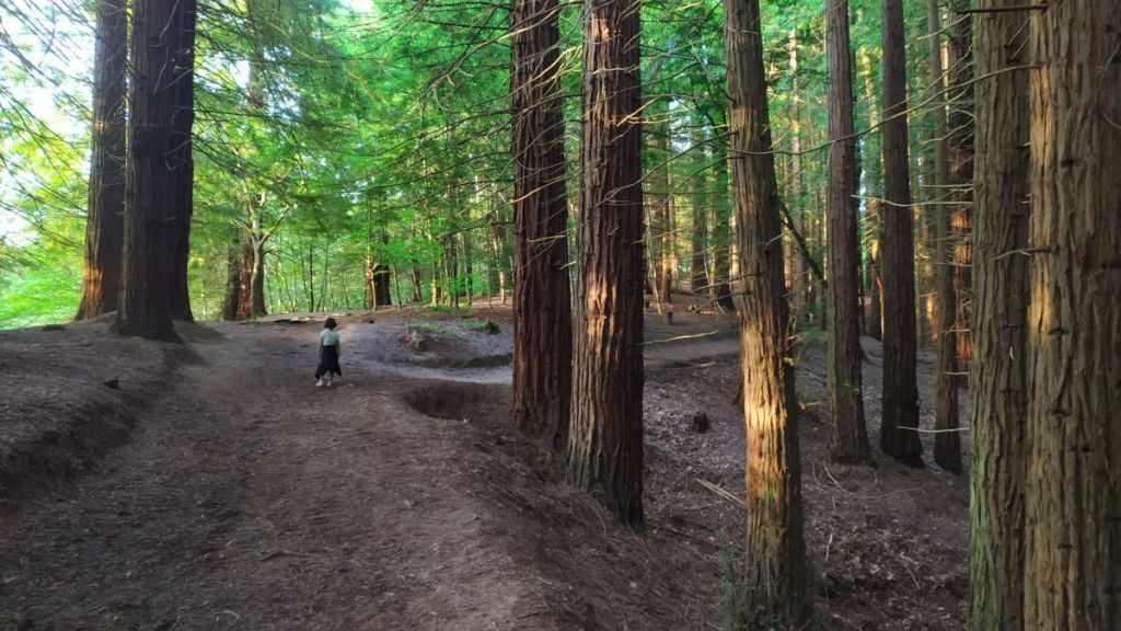 ruta con niños por el monumento natural de las secuoyas del monte cabezón en cantabria