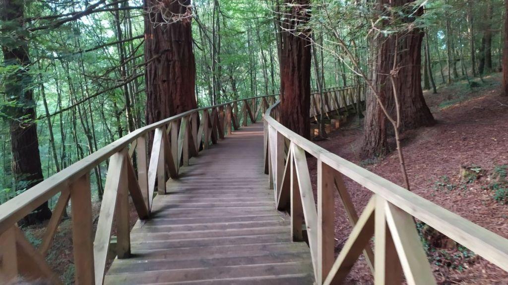 Pasarela de madera que mejora la accesibilidad al bosque de secuoyas de Cantabria
