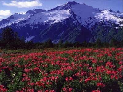 Paesaggi Alpini Sfondi