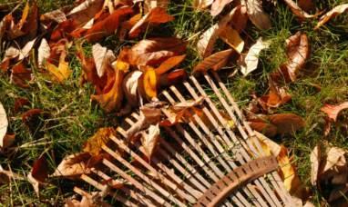 rake leaves