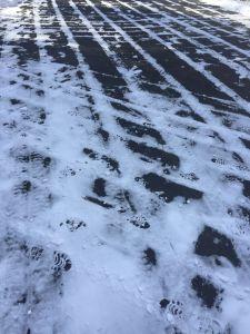 snowcrisscross