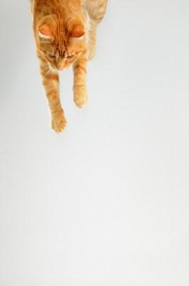 cat-3161795_1920