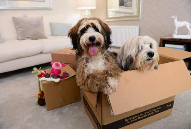 SGB 143 BG - A couple of dogs, Doris and Dudley, in a show home-9e0d805e