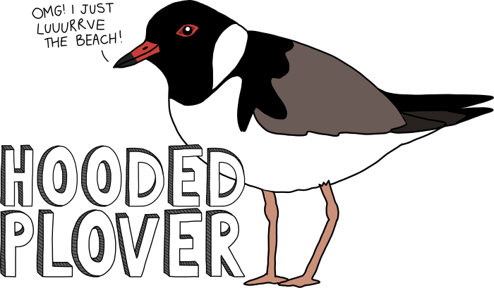 hoodie the plover-700