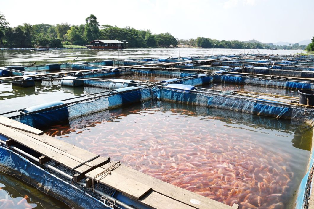 Bluecarbon-fish farm-shutterstock_436719832-1920-80