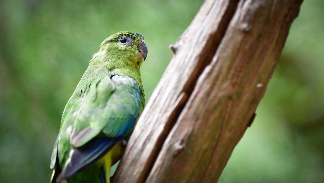 Bluecarbon-parrot-shutterstock_627492968-1920-80