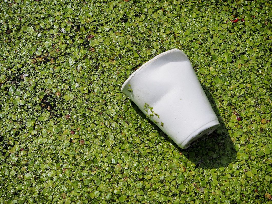 coffee cup in a pond