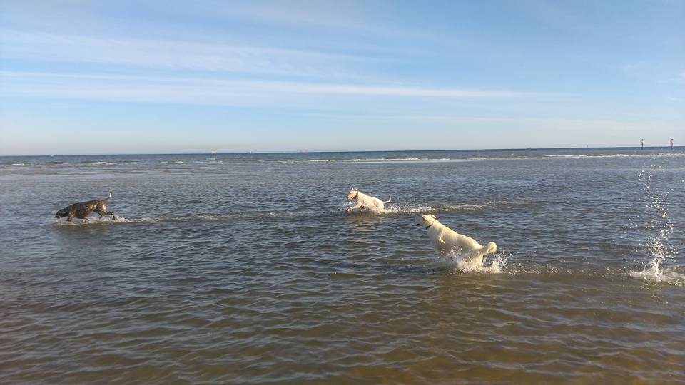 Frivolity in full swing at Altona Dog Beach. Dogs are jumping through the water causing a splash. Image: Sarah Thomson