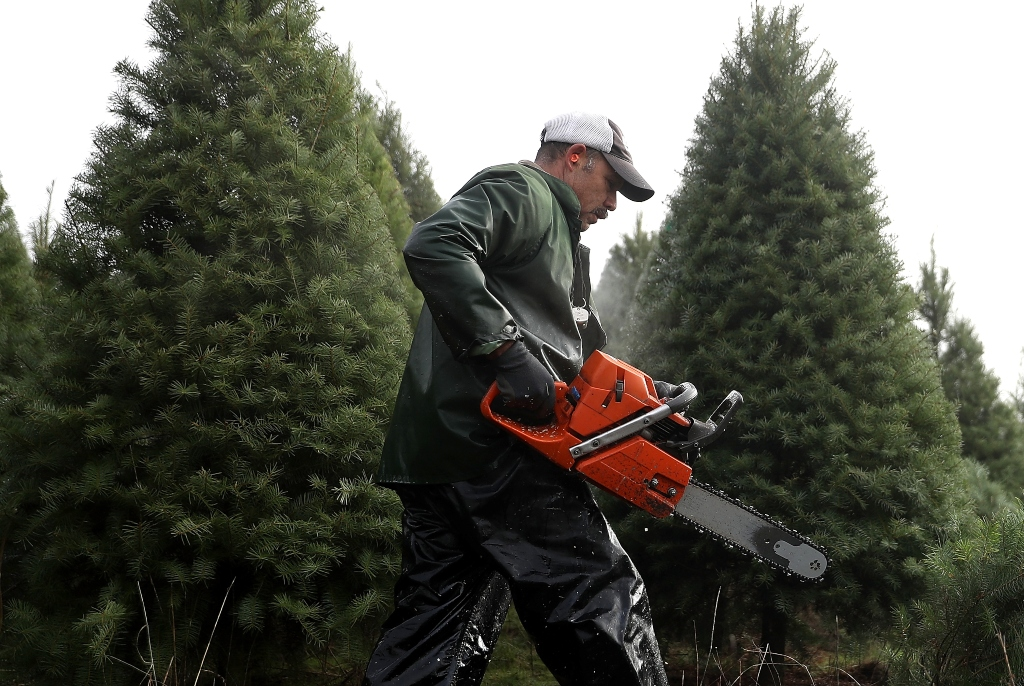 Bah Humbug! Nationwide Christmas Tree Shortage Could Spike Prices