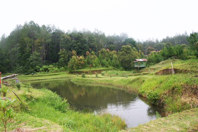 Our visit to a beautiful forest garden in Tarutung, a possible eco tourism resort in the area