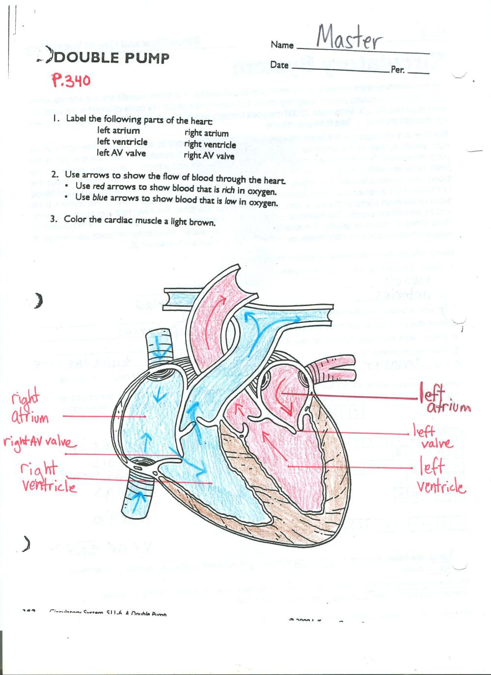 medium resolution of click here to access a completed version of the internal anatomy of the heart diagram