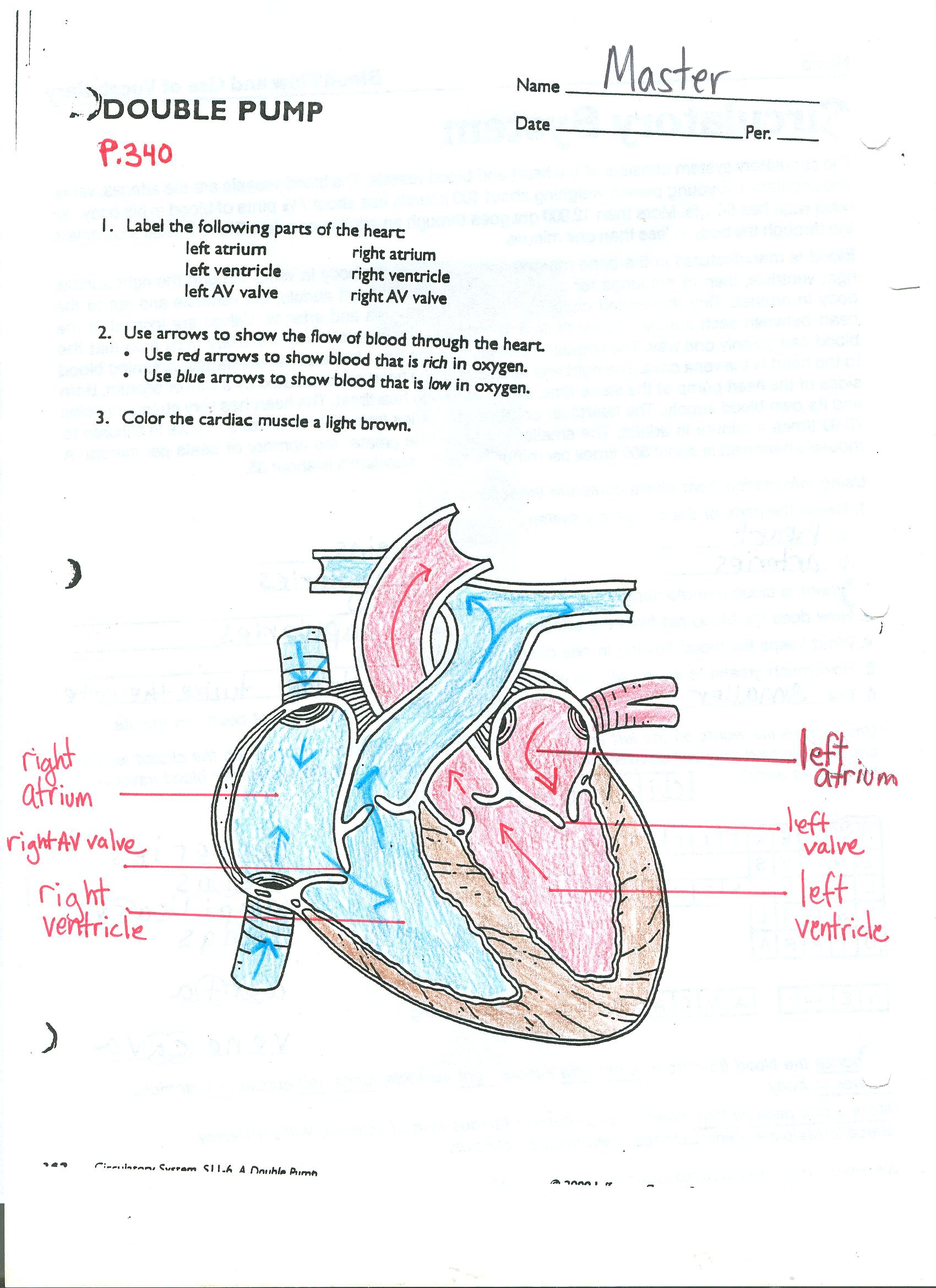 hight resolution of click here to access a completed version of the internal anatomy of the heart diagram