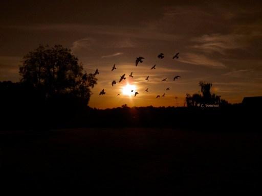 Stillhet solnedgång fåglar