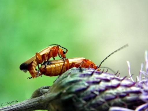 01 Djuriskt insekter