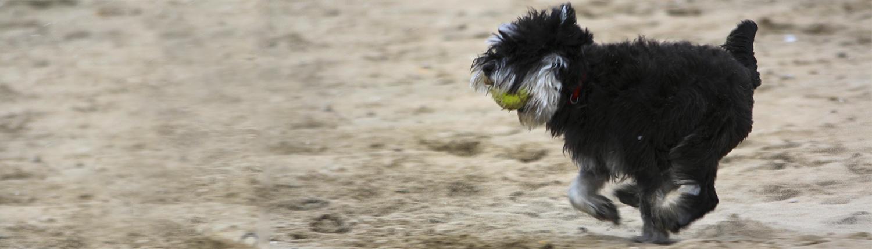 Bobbie in actie op het strand