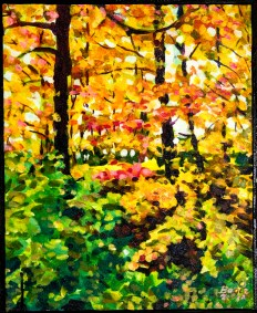 1 Forest Fall Colours
