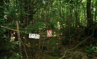 Aokigahara 3